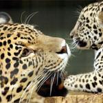 Wild Animals in Costa Rica Jungles